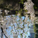 浦和桜花賞